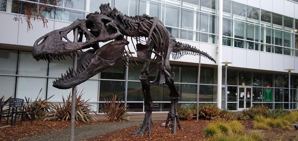 グーグルプレックスのT-Rex化石標本
